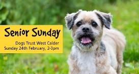 Senior Sunday - 24th February at Dogs Trust West Calder