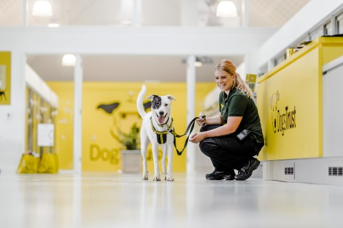 Basildon Rehoming Centre