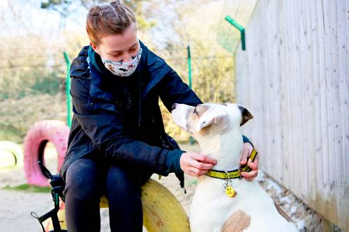 Covid safety at Shoreham Rehoming Center