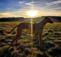 Dog Rehoming Success Stories   Dogs Trust