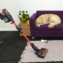 A dog on the sofa whilst a Shark vacuum is used