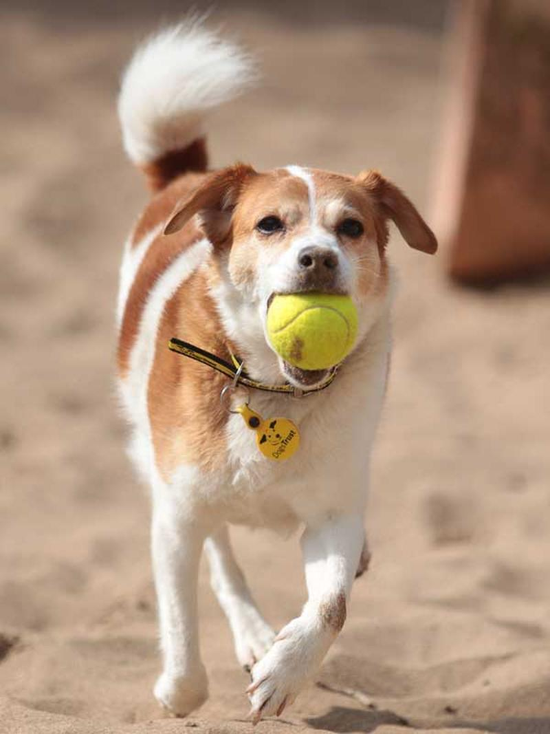 Small Dogs For Rehoming Uk
