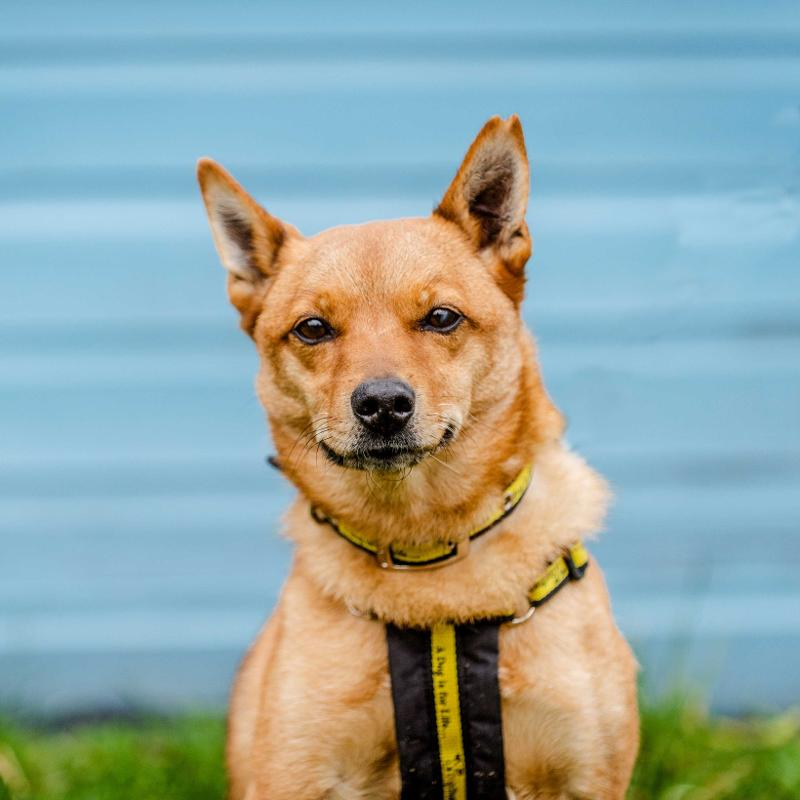 Dogs Rehoming & Dog Adoption Charity | Dogs Trust