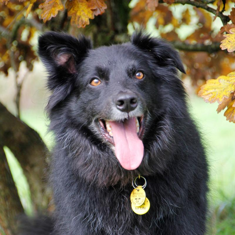 Dogs Rehoming & Dog Adoption Charity   Dogs Trust