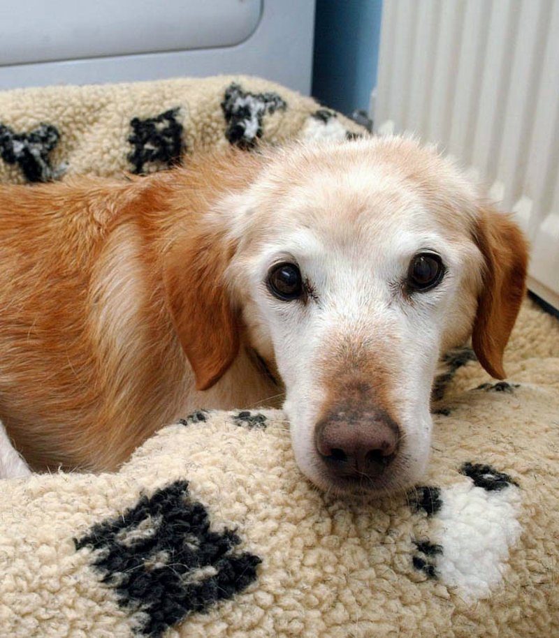 Hope Rescue Dogs For Rehoming