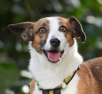 dogs rehoming amp dog adoption charity dogs trust